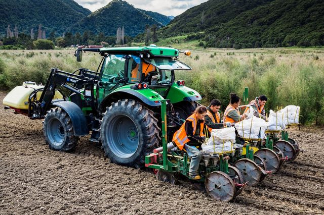 NZ Mānuka Group top of the planting leader board for 2019