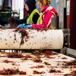New Seaweed Factories Call for More Collectors