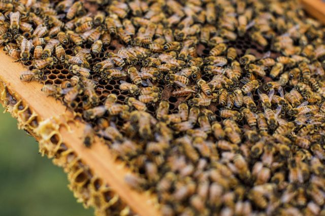 Working Together for Healthy Bees & Strong Hives